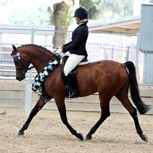GV Arabian Horse Club Muster & Championships