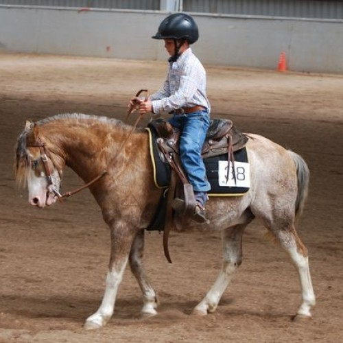 Reining Aus Vic Youth Camp