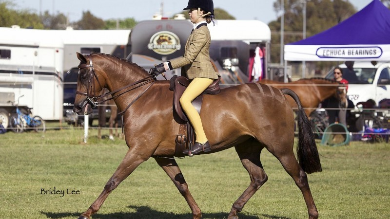 SHCV Junior Equestrian Showcase