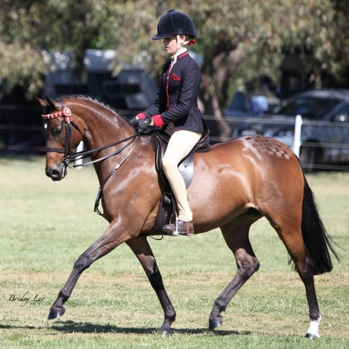 Shepparton Show - Horse Competition