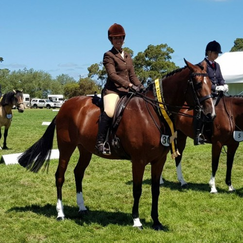 Clydesdale Cross Sport Horse Association Annual Show