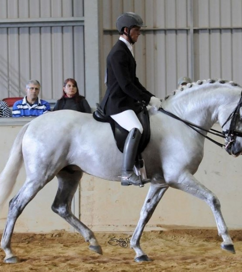 Andalusian Horse Association of Australia State Championship Show
