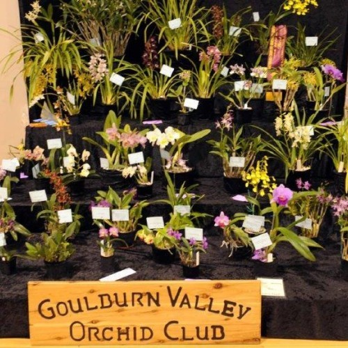 Annual Spring Orchid Spectacular