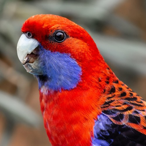 Pictures and Parrots