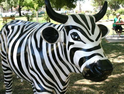 Zebra cow with picnic people